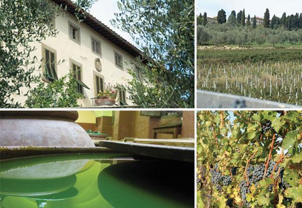 À esquerda, oliveiras na Villa Capezzana (alto)e seus lagares de azeite (baixo); à direita, vista panorâmica e detalhes de vinhedos toscanos.